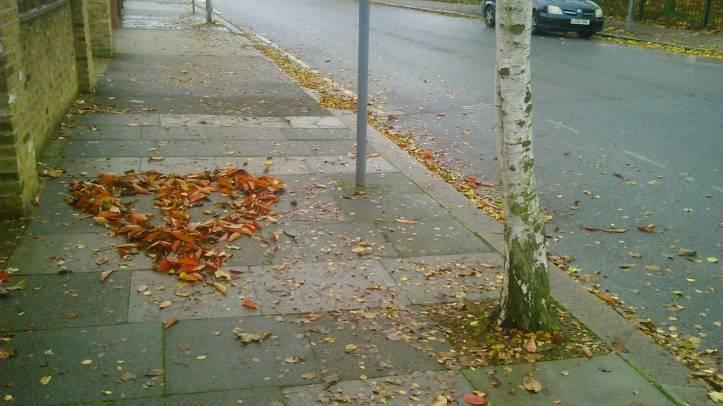 sw_leaves_7nov_10